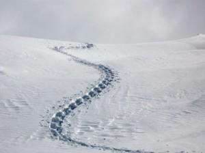 Snow, footprints